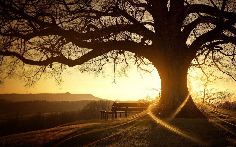 treehuggerbyrockgelio19ho7
